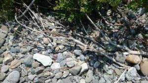河川の流木4