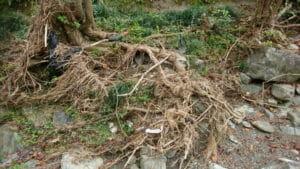 沢の流木3