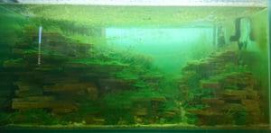 藻類藻類藻類藻類