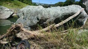 河川の流木1