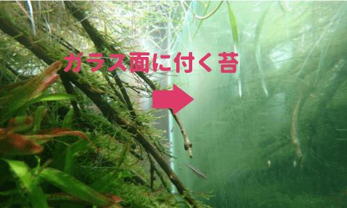ガラス面に付く藻類