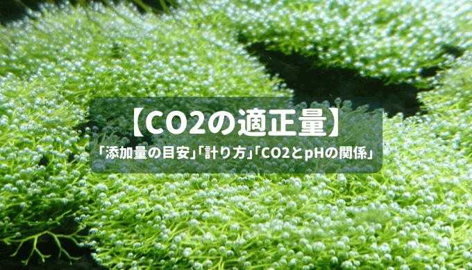 【CO2の適正量】CO2添加量の目安と計り方、CO2とpHの関係などを徹底解説!
