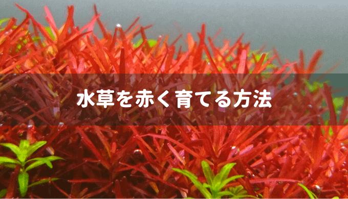 【水草を赤く育てる方法】赤くなる条件を詳しく解説
