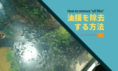 【プロが解説】水槽の油膜対策 ー水面をキレイにする4つの方法ー