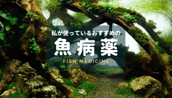 【魚病薬まとめ】私が使っているおすすめのお薬をご紹介