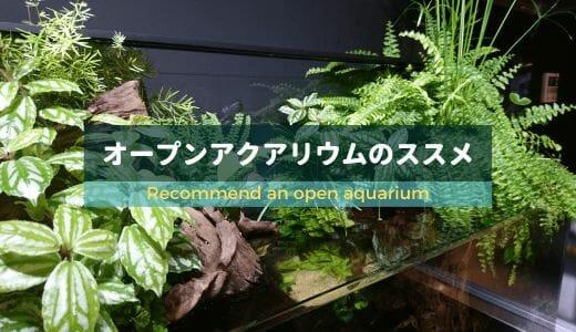 【藻類予防に効果大!】オープンアクアリウムのススメ ー美しい水辺を作ろうー
