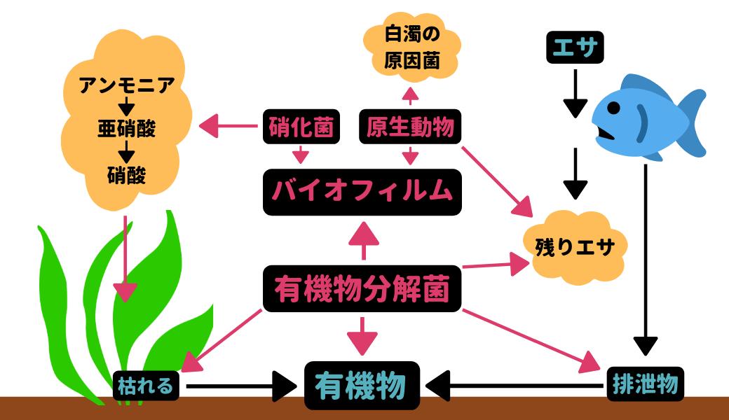 【ろ過バクテリア】生物ろ過を詳しく解説