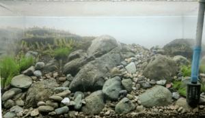水草の植栽