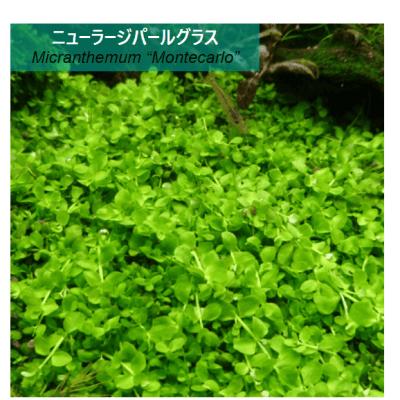 水草の画像