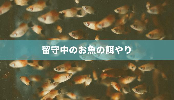【自動で餌やり?絶食?】留守中のお魚の餌やりまとめ