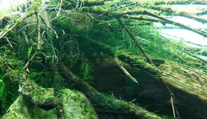 本物の川みたい