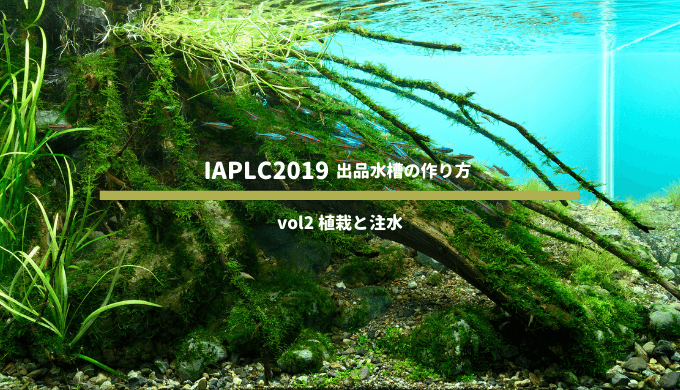 【IAPLC2019】世界水草レイアウトコンテスト 出品水槽の作り方 vol2 植栽と注水