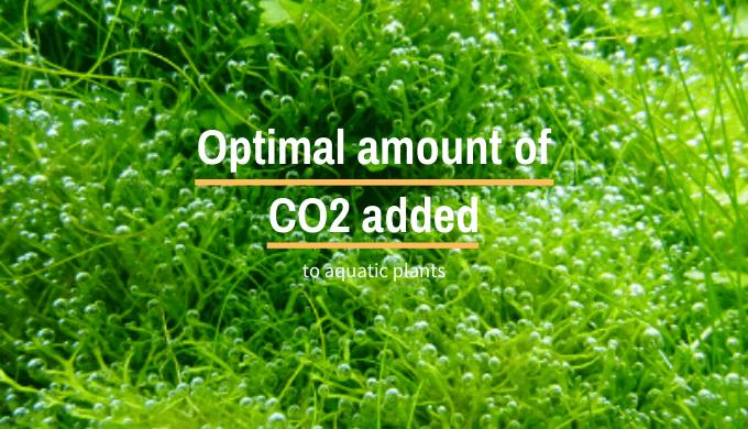 Optimal amount of CO2 added to aquatic plants