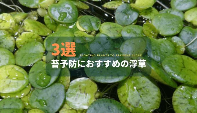 藻類予防におすすめの浮草3選