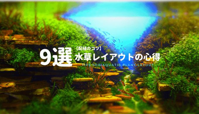 【配植のコツ】水草を格好良くレイアウトする心得9選