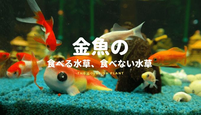 金魚の食べる水草、食べない水草