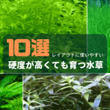硬度が高くても育つ水草