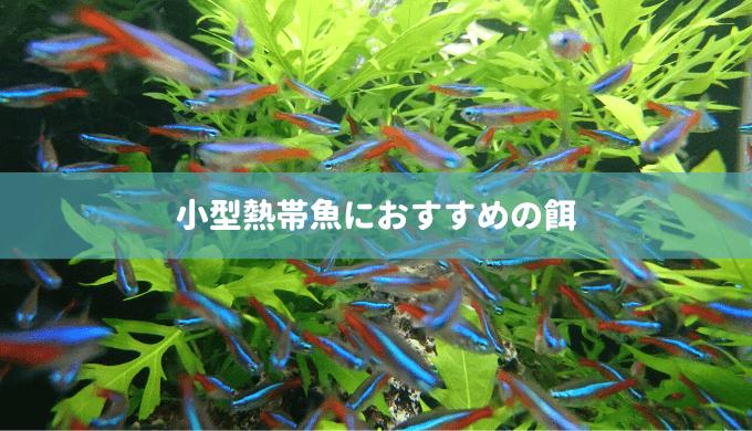 【プロが選んだ】小型熱帯魚におすすめの餌