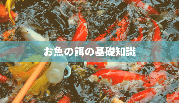 【餌の種類と特徴】お魚の餌の基礎知識まとめ