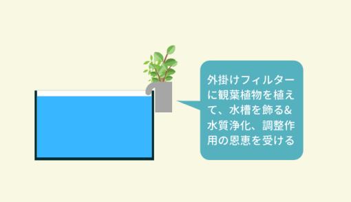 外掛けフィルターに植物を植える方法