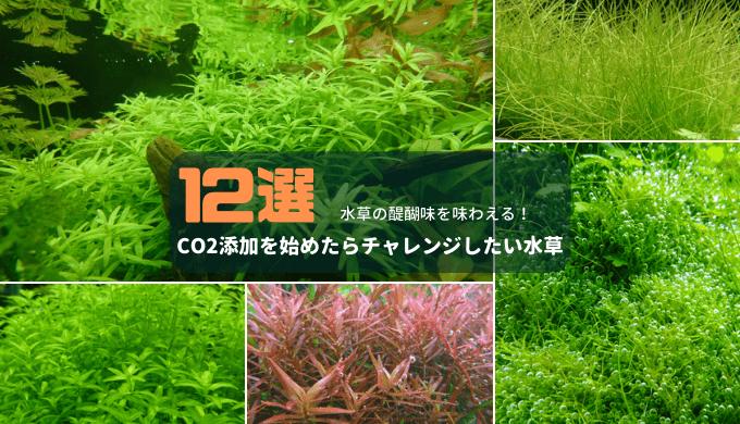 CO2添加を始めたらチャレンジしたい水草12選