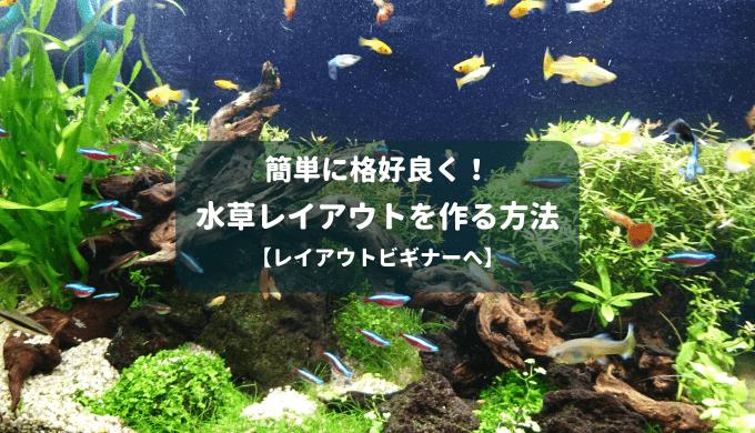 【シンプル!】簡単に格好良い水草レイアウトを作る方法