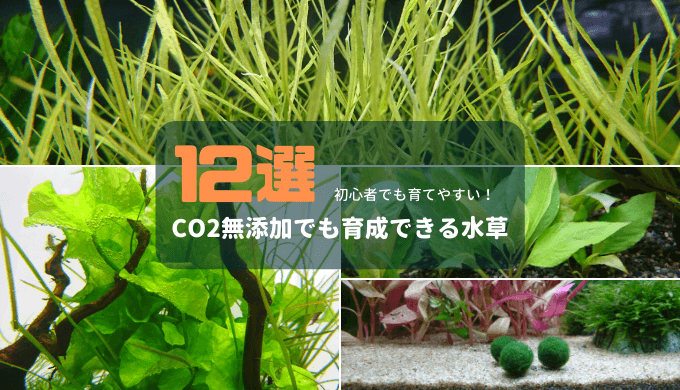 【初心者でも育てやすい】CO2無添加でも育成できる水草12選