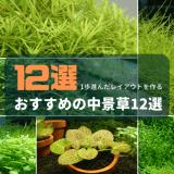 おすすめの中景草12選