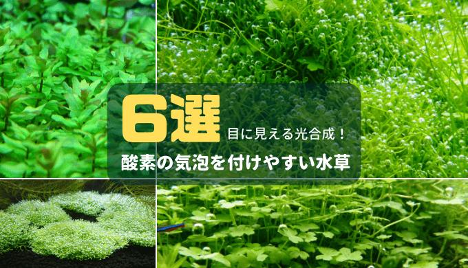 【目に見える光合成】酸素の気泡を付けやすい水草6選