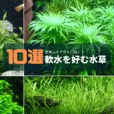 軟水を好む水草10選