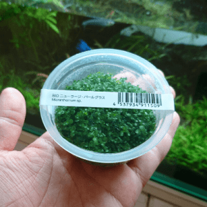 組織培養水草
