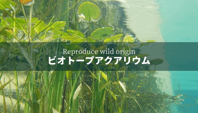 【自然環境を再現】ビオトープアクアリウムとは?