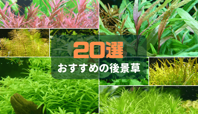 【水草の森を作る】おすすめの後景草20選
