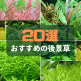 おすすめの後景草20選