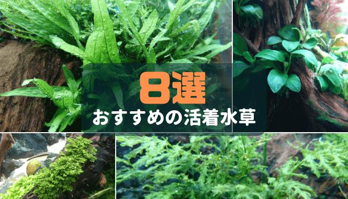 【自然感アップ】おすすめの活着水草8選