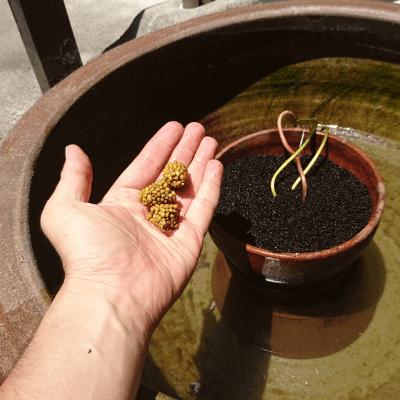 肥料を追加