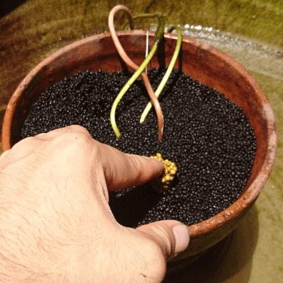 固形肥料を入れる