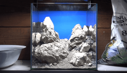 石組み水槽