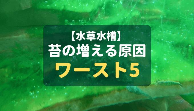 【水草水槽】藻類の増える原因ワースト5 ー予防法も解説!ー