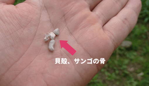 貝殻、サンゴの骨
