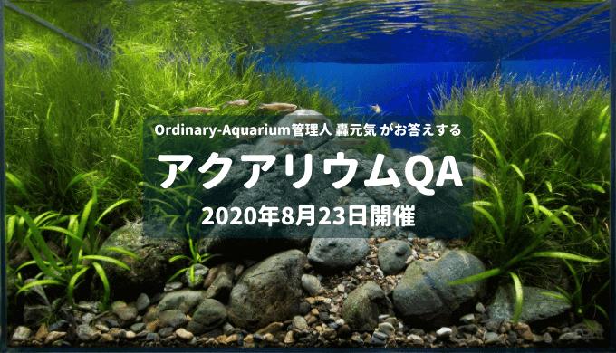 2020年8月23日開催 アクアリウムQA