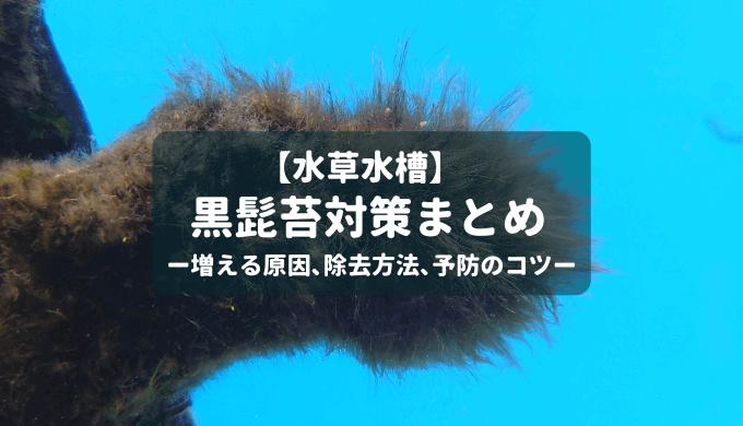 【頑固な藻類】黒髭苔対策まとめ ー増える原因、除去方法、予防のコツー