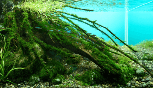 120cm陰性水草