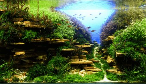 120cm陽性水草