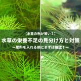 水草の栄養不足の見分け方と対策