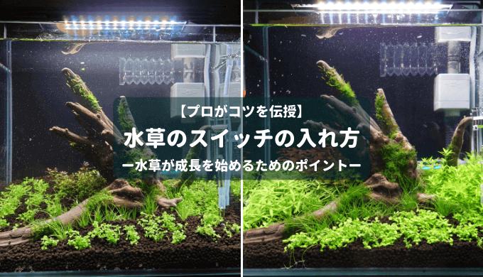 【プロが伝授】水草のスイッチの入れ方 ー水草が成長を始めるためのポイントー