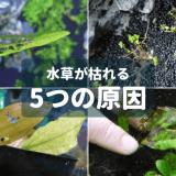 水草が枯れる5つの原因