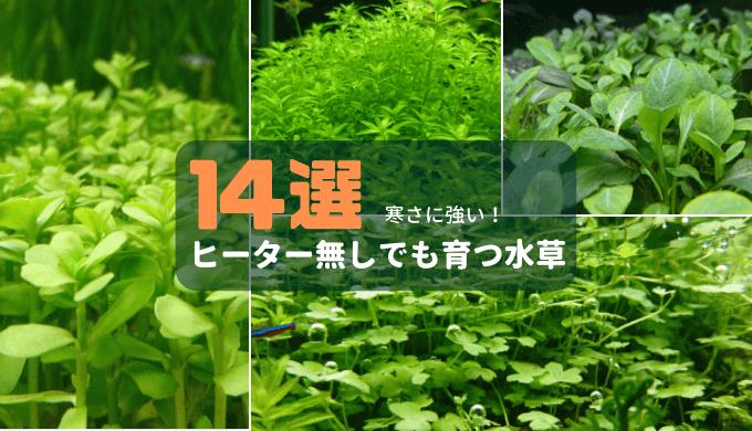 【寒さに強い!】ヒーター無しでも育つ水草14選