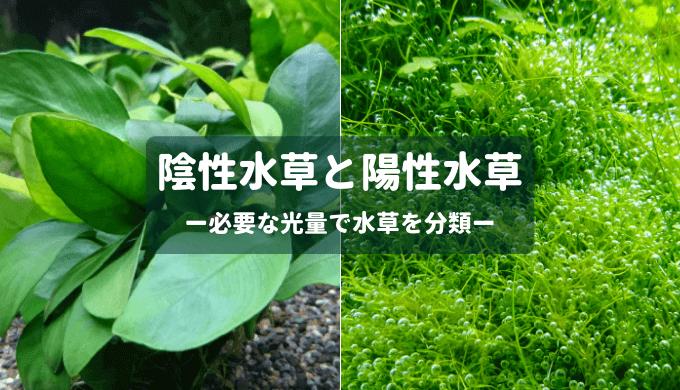 陰性水草と陽性水草