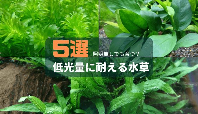 【照明無しでも育つ?】低光量に耐える水草5選